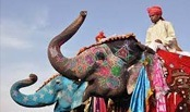 Elephant Festival is a festival celebrated in Jaipur city in Rajasthan state in India